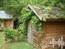 shed look at the cactus growing on the