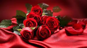 5xx Error   Roses rouges, Bouquet de roses rouges, Fleur rose rouge