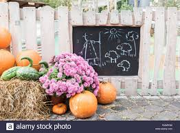 Pumpkins Fence In Autumn Field High Resolution Stock Photography And Images Alamy