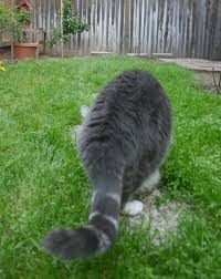 The Ultimate In Cat Proof Fencing Fence Supply Online