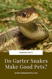 do garter snakes make good pets