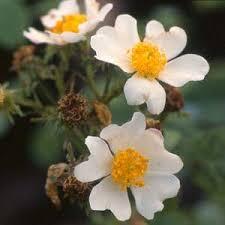 أجمل صور ورود حب ورومانسية لطيفة جدا Rose Wild Roses Buy Roses