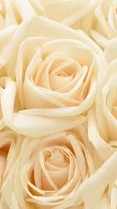 hd wallpaper pastel roses flowers