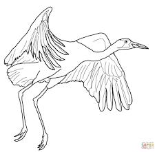 Kraanvogels Kleurplaten Gratis Printbare Kleurplaten