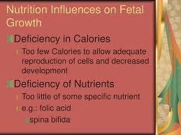 ppt lifecycle nutrition powerpoint