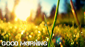 good morning wallpapers free