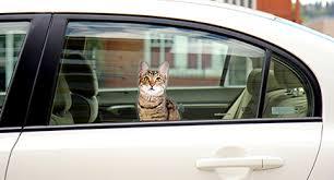 Passenger Pets Window Clings Add Fun To Any Window Hauspanther