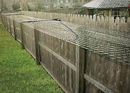 Free Standing Cat Fence Enclosure System Cat Fence Cat Proofing Outdoor Cat Enclosure
