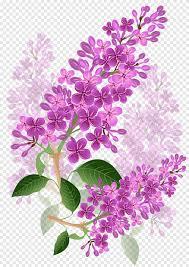 بتلات الزهور الأرجواني التوضيح زهرة أرجواني لافندر البنفسجي