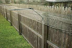 Keeping Your Cat Safe At Home Without Installing An Ugly Cat Fence Catfence