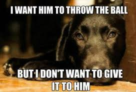 Image result for funny pet memes