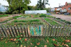 urban farms fuel idealism profits not