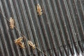 how to get rid of head lice 11 home