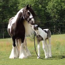 خيول وخواطر اجمل صور الخيول بالعالم Home Facebook