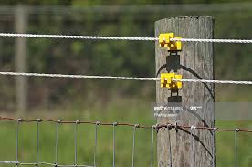 Dog Electrocuted By Electric Fence