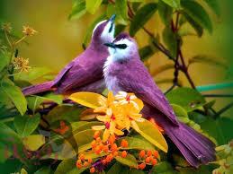 صور طيور نادرة و أجمل صور طيور قد تراها في العالم