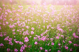 Beautiful wild flowers in the green grass. Photo | Premium Download