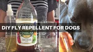 natural fly repellent for dogs