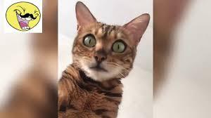 قطط مضحكة جدا مقاطع تجميعية مضحكة للقطط Youtube
