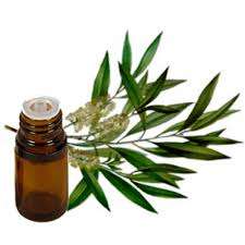 Liquid Melaleuca alternifolia Tea Tree Oil, For Cosmetic Industry ...
