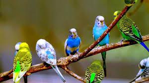 شعر عن العصافير اجمل كلام عن العصافير صور حزينه