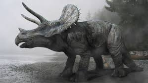 triceratops wallpapers top free