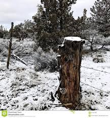 Juniper Stump Fence Post With Snow Stock Image Image Of Forest Black 87550789