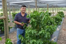 coffee farm thriving in the rio grande