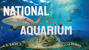 national aquarium baltimore video tour