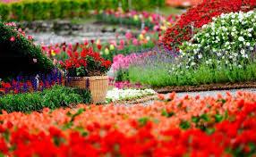 colorful flower garden hd wallpaper