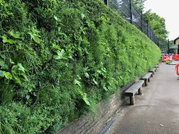 living wall installed at london primary