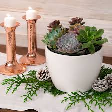 succulent garden gift from park seed