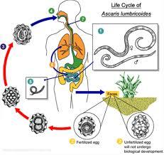 homemade health parasites