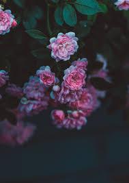 صور ورد خلفيات ورد صور ورد طبيعي صور ورد احمر صور ورد حلوه صور ورد