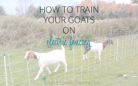 How To Train Goats On Electric Fence Simple Living Country Gal