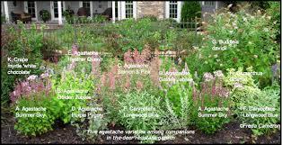 garden and travel agastache plan