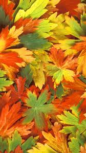 fall leaves iphone 5 5s 5c wallpaper