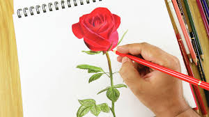 تعلم رسم الورود رسم الورد بكل سهوله مشاعر اشتياق