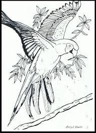 Papegaai Dieren Kleurplaten Vogels Tekenen