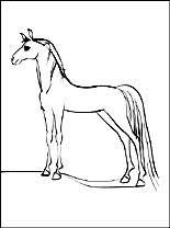Paarden Kleurplaat Gratis Kleurplaten