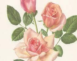 Sonia roses | Etsy