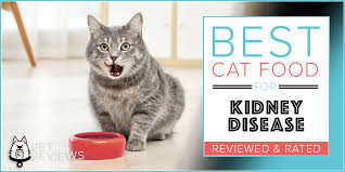 cat foods for kidney disease
