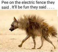 The Fun Of Getting Shocked By An Electric Fence Agrisellex