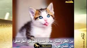 صور حيوانات جميلة مكتوب عليها كلام وحكم Youtube