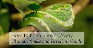 How To Get Rid Of Snakes Complete Snake Repellent Guide For 2016