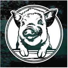 Round Pig Peeking Decals Stickers Decal Junky