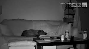 dog senses utah earthquake before it