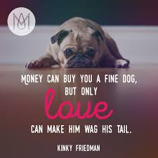 man s best friend inspirational quote feed a dog some coo flickr