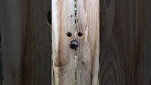 Neighbor Makes Curious Dog A Peekaboo Spot In The Fence Video The Dog People By Rover Com