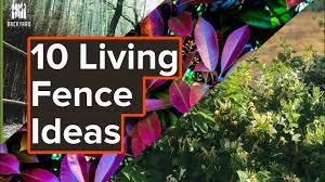 10 Living Fence Ideas To Get Your Creative Juices Flowing Youtube